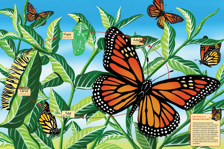 Life Cycle of a Monarch Butterfly - 24 x 36 Floor Puzzle