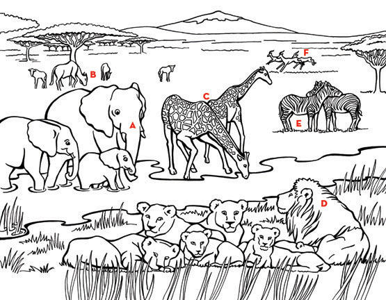 africa+bushes Colouring Pages