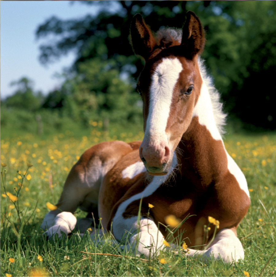 cute baby foals - photo #23