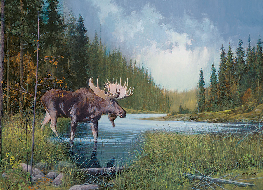 Image of moose in a lake