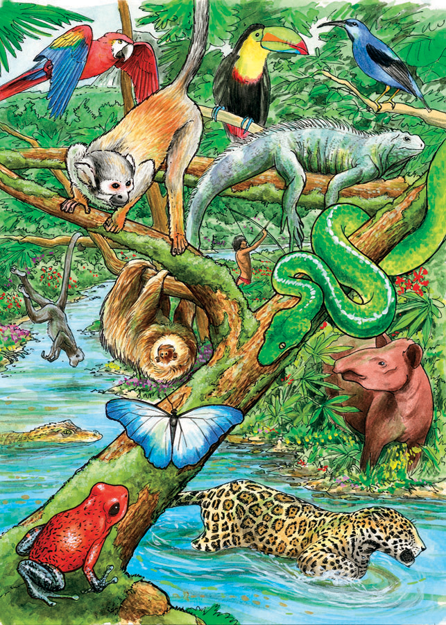 Life in a Tropical Rainforest tray puzzle for kids
