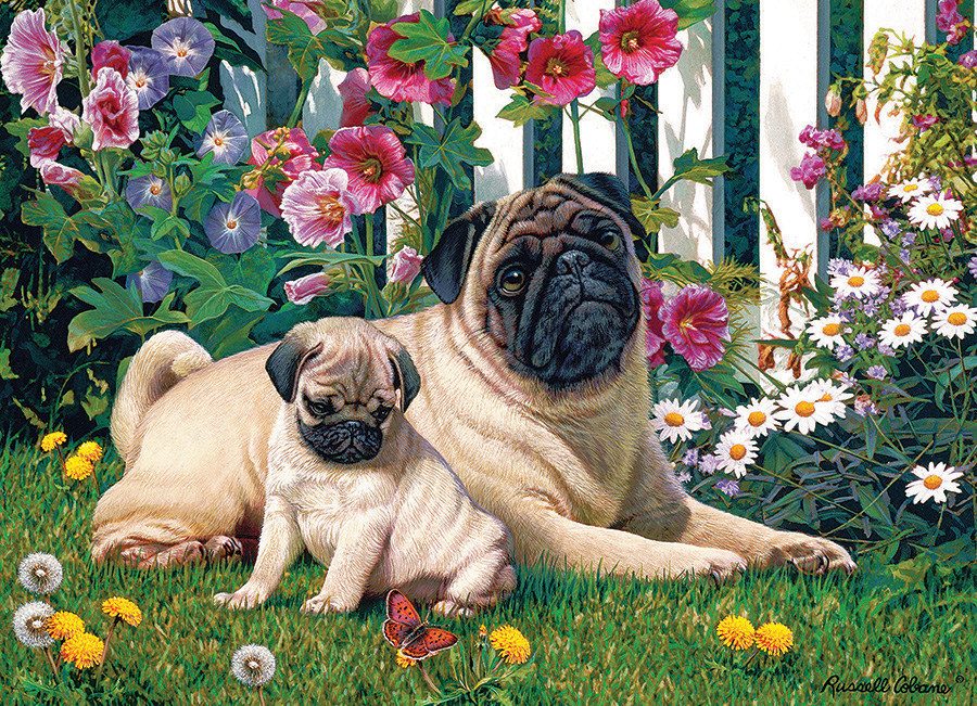 Pug Family 1000 piece dog puzzle by Cobble Hill