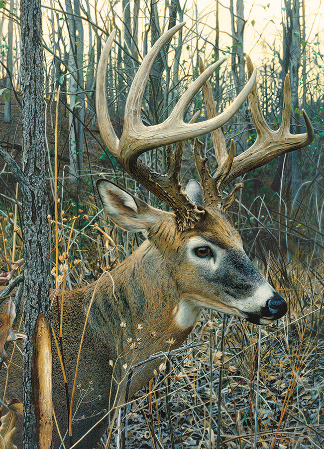 White Tailed Deer 1000 piece wildlife by Cobble Hill Puzzle