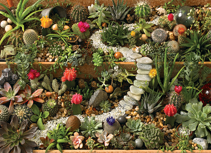 Succulent Garden Cobble Hill Puzzle Co - 1000 piece
