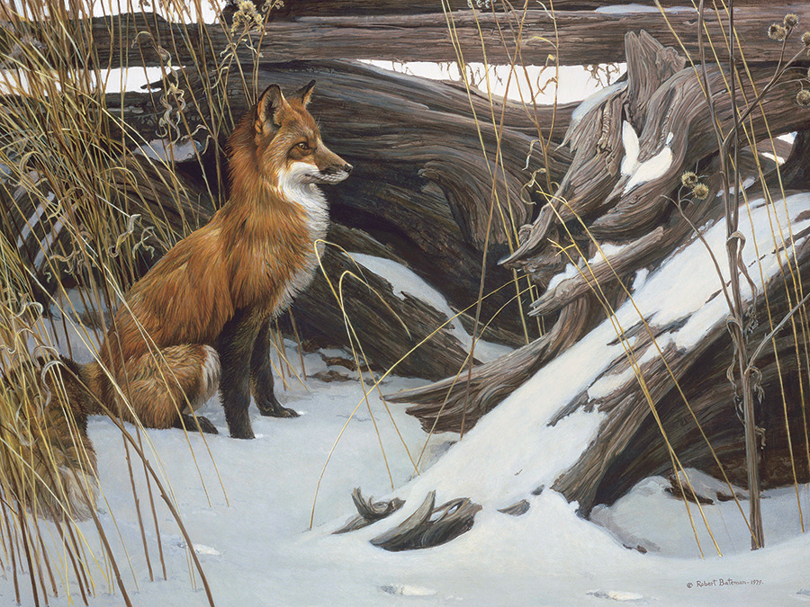 Wily and Wary 500 piece fox puzzle by Cobble Hill & artist Robert Bateman