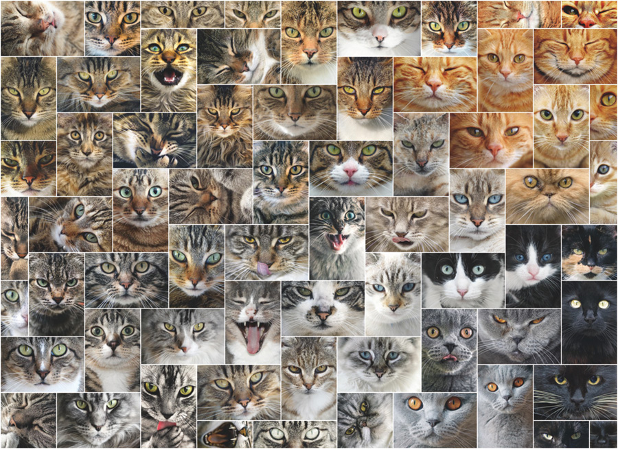 Cat Faces 1000 piece D-Toys puzzle